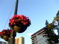 街のあちこちに花がありました