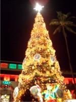 市庁舎前の巨大クリスマスツリー