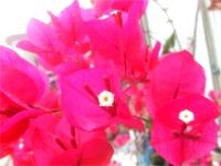 葉の鮮やかな花