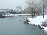 氷の張った徐家匯(シュージャーフイ)公園内の池