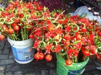 お正月の飾花