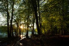 シャトー・ド・ラ・ヴェルリーの公園内の美しい森