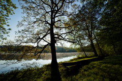 シャトー・ド・ラ・ヴェルリーの公園内の木々