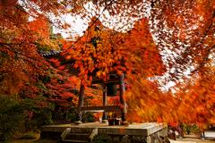 14位 秋雨に踊る紅の舞、滋賀県東近江市、東光寺、紅葉、鐘楼