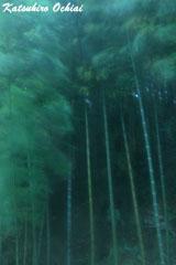 緑青、竹林、落合勝博、雨の撮影