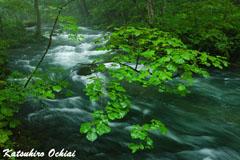 早瀬に萌ゆ、奥入瀬渓流、落合勝博、雨の撮影