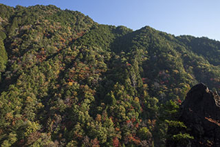 南木曽、木曽路、柿其渓谷、紅葉、林道の景色