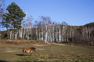 南木曽、長野県、木曽馬の里