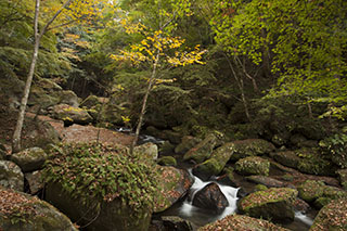 愛知県豊田市、王滝渓谷、秋、紅葉、2012年
