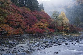 愛知県豊田市、香嵐渓、2012年、紅葉