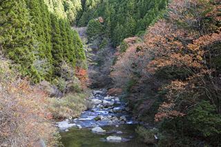 愛知県豊田市、大多賀渓谷、2012年、紅葉
