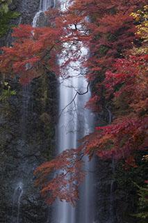 大阪府箕面市、箕面公園、箕面大滝、紅葉、2012年