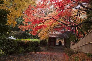 京都府京都市、大原野、小塩山、金蔵寺、紅葉、2012年