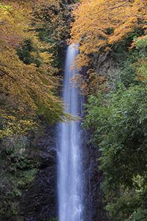 岐阜県養老町、養老の滝、紅葉、2012年