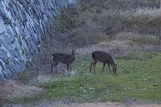愛知県名古屋市、名古屋城、2012年、鹿、堀