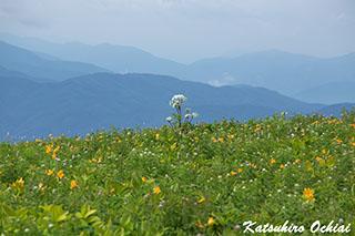 長野県、霧ヶ峰、ニッコウキスゲ、落合勝博