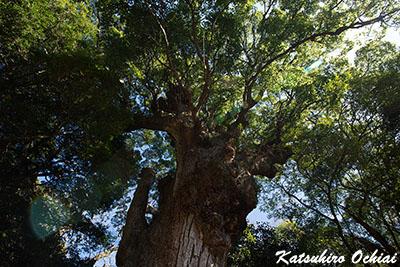 長崎県対馬市、豆酘、多久頭魂神社、天照大神、天道信仰、対馬最大の大楠