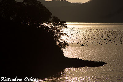 長崎県対馬市豊玉町、真珠の浜