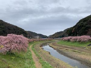 第21回みなみの桜と菜の花まつり