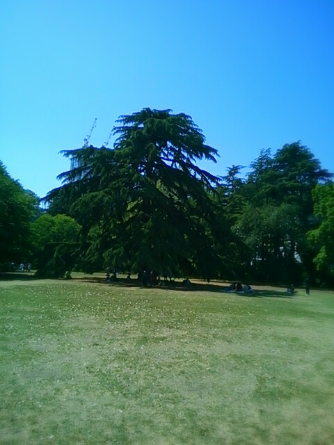 aviary_1430879396831.jpg