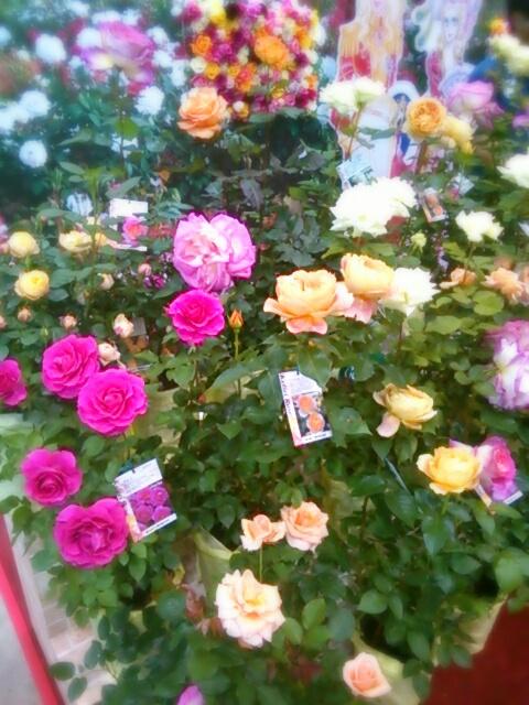 aviary_1461488904968.jpg