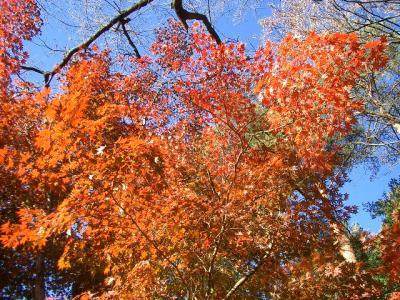 天竜峡の紅葉2007年_1