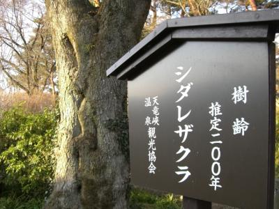 天竜峡の桜2008年3