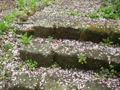天竜峡の桜_2008年3