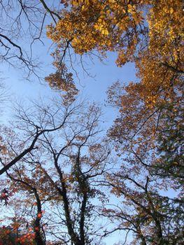 天龍峡冬木立