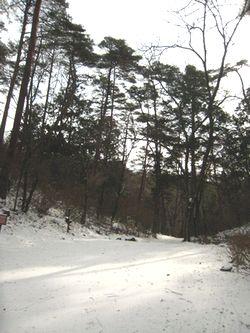 遊歩道 雪
