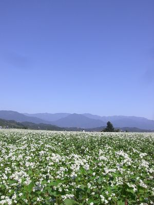 天龍峡花の里
