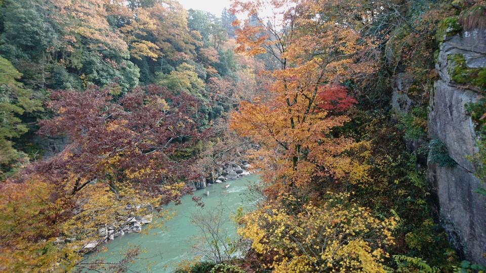 tenryukyokoyojoho (November 15)