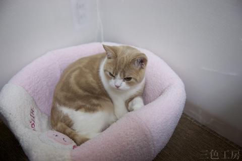 Cat Nitaro