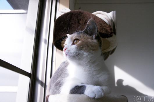 Cat Nano