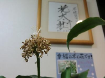 CIMG4634.JPG