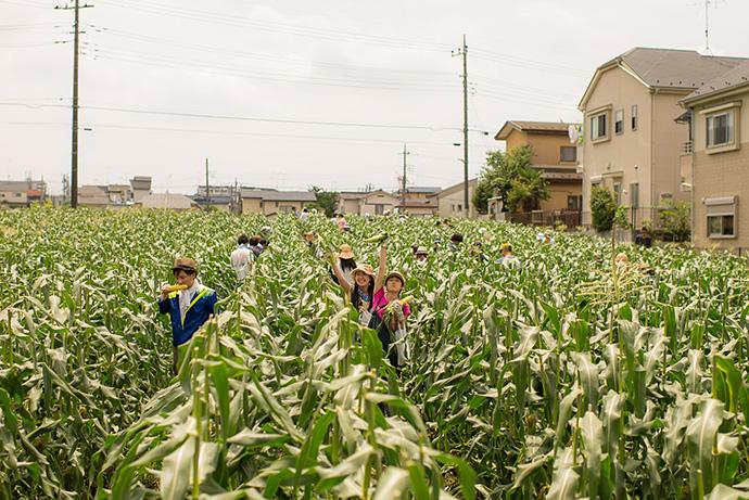 夏のトウモロコシ祭