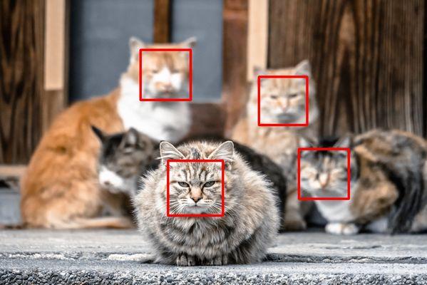 Neko-face.jpg
