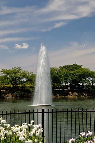 噴水と菖蒲