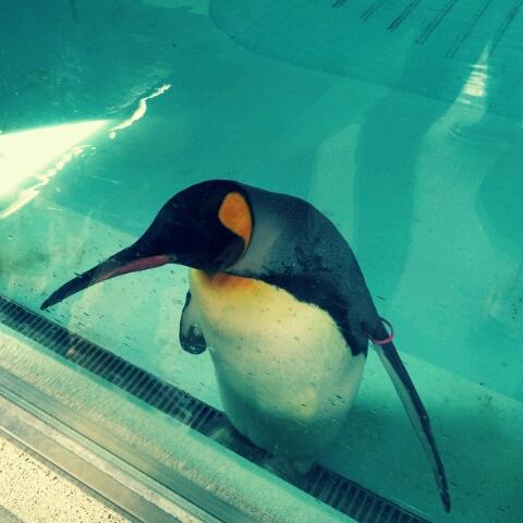 ペンギンちゃん.jpg