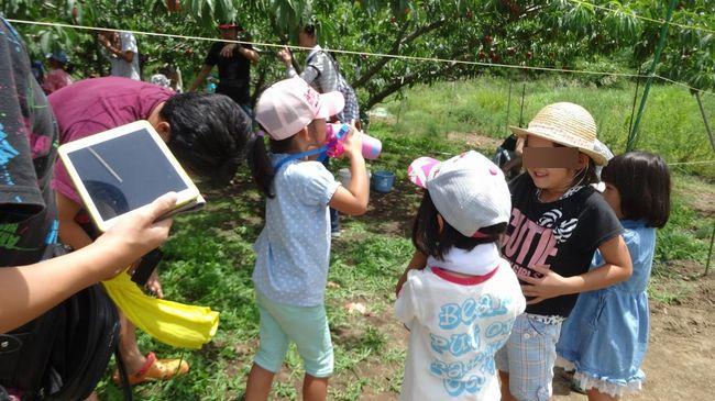 2017年H29山梨一宮御坂の桃狩りはどこがオススメ?食べ放題時間制限なしの農園