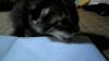 縞猫その2