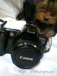 マイカメラ。with犬。