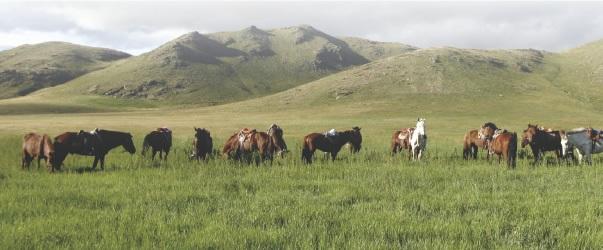 蒙古高原ー8