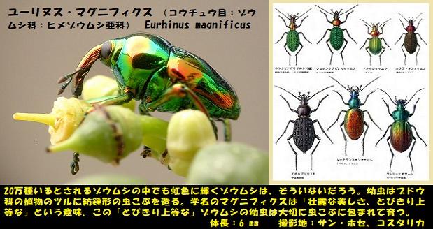 昆虫ー003