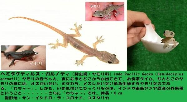 爬虫類ー1