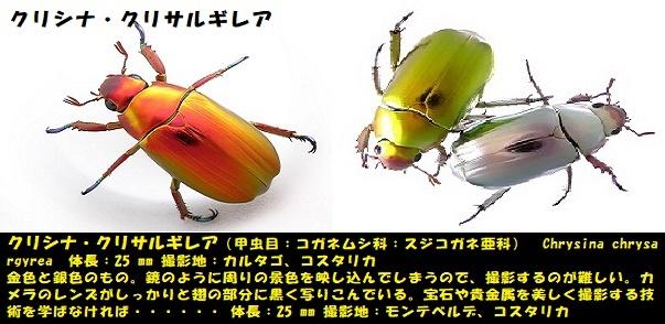 昆虫ー005