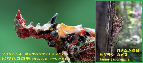 昆虫ー015