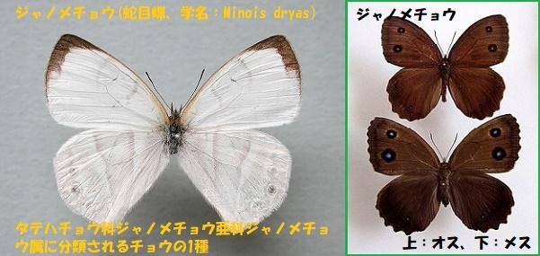 昆虫ー017