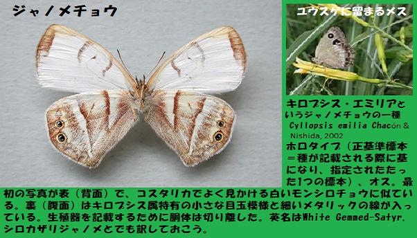 昆虫ー018