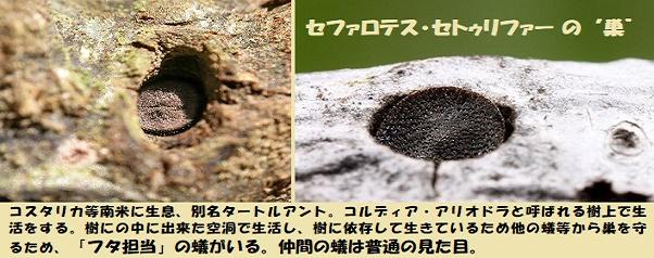 アリの巣-1